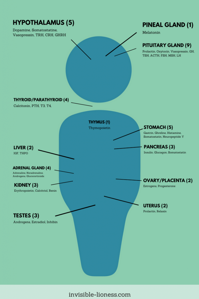Infographic about hormones in the human body and where they are produced.