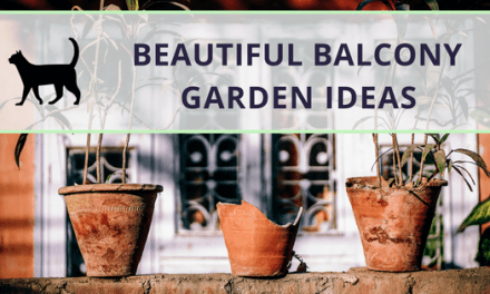 Beautiful balcony garden ideas: affordable and practical