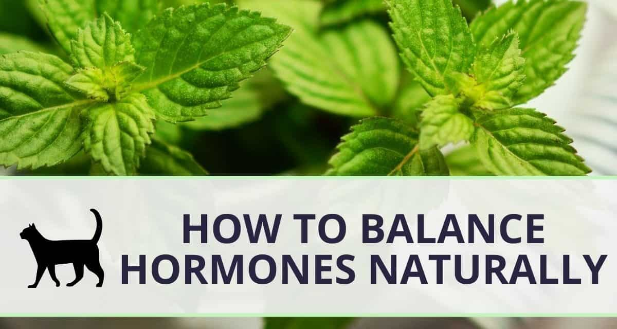 How to balance hormones naturally: everything you need to know