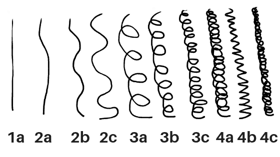 graphic with examples of single hair strands from the various hair structures by the most common hair classification