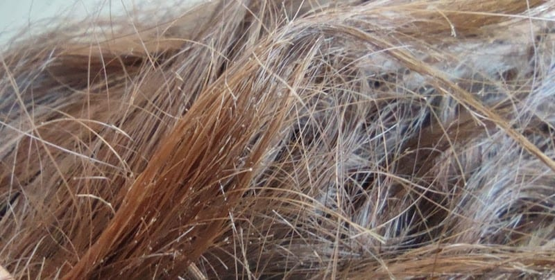 Close up of brunette hair with breakage and split ends